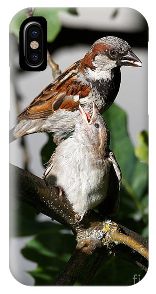 IPhone Case featuring the photograph House Sparrow - Feed Me Daddy by Sue Harper