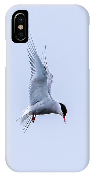 Hovering Arctic Tern IPhone Case