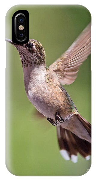 Hovering Hummer 1 IPhone Case