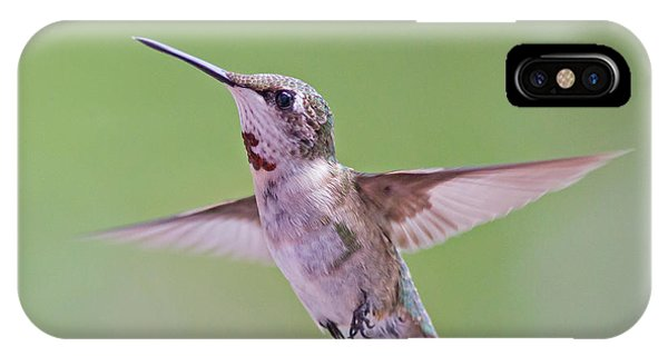 Hovering Hummingbird 5 IPhone Case