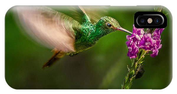 IPhone Case featuring the photograph Hovering In The Vervain  by Rikk Flohr