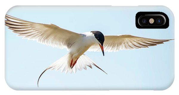 Hovering Tern IPhone Case