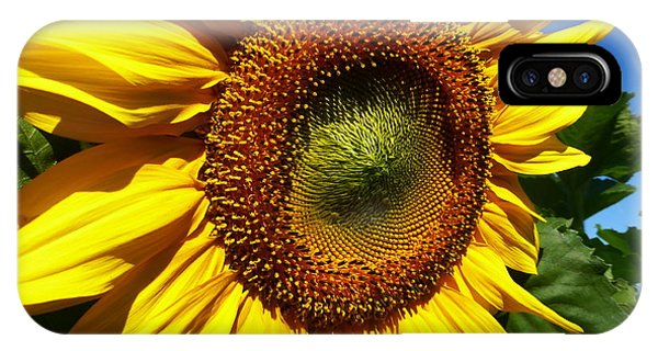 Huge Bright Yellow Sunflower IPhone Case