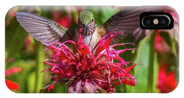 Hummingbird At Eagles Nest IPhone Case