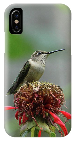 Humming Bird Atop Bee Balm IPhone Case