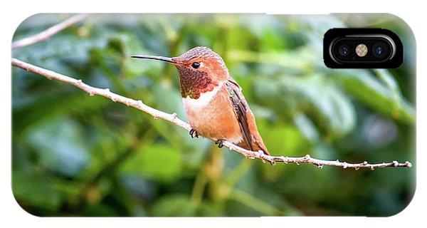 Humming Bird On Stick IPhone Case