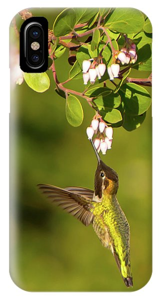 Hummingbird And Manzanita Blossom IPhone Case