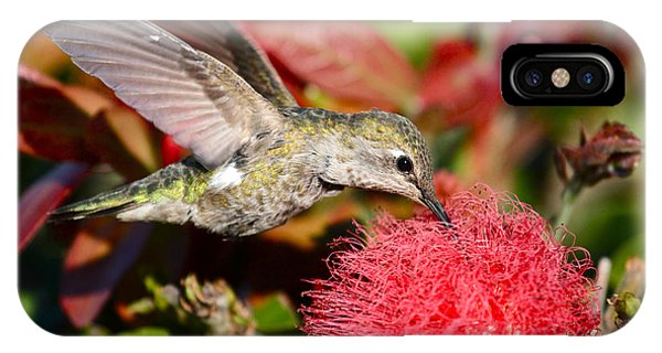 Hummingbird And Red Flower IPhone Case