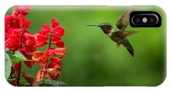 Hummingbird And Scarlet Sage IPhone Case