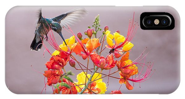 Hummingbird At Work IPhone Case