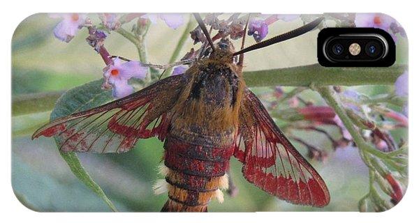 Hummingbird Butterfly IPhone Case