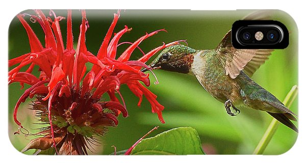 Hummingbird Delight IPhone Case