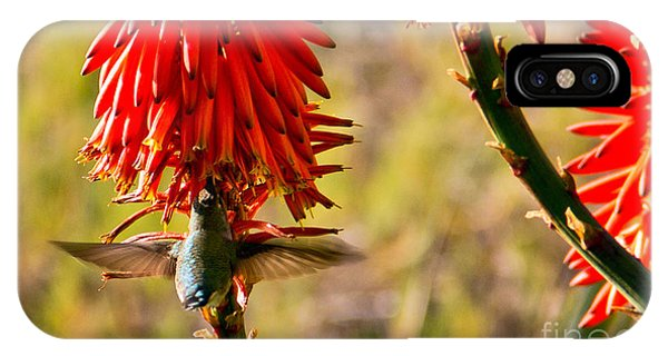 iPhone Case - Hummingbird Feeding by Kelly Holm
