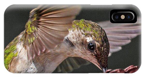 Beautiful Hummingbird iPhone Case - Hummingbird Graceful Little Lady by Betsy Knapp