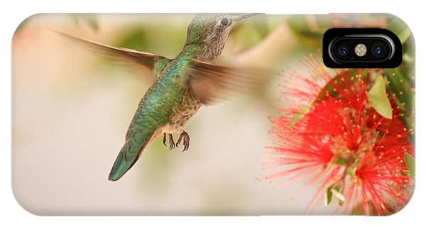 Hummingbird In Paradise IPhone Case