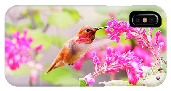 Hummingbird In Spring IPhone Case