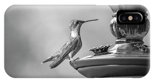 Beautiful Hummingbird iPhone Case - Hummingbird Intrigue  by Betsy Knapp