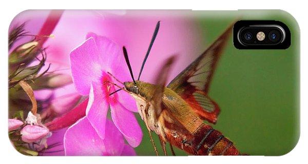 Hummingbird Moth Feeding 1 IPhone Case