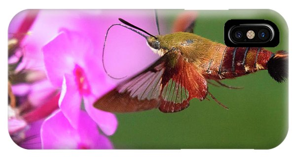 Hummingbird Moth Feeding 2 IPhone Case