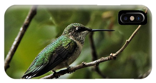 Hummingbird On Branch IPhone Case