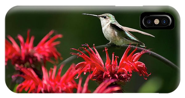 Humming Bird iPhone Case - Hummingbird On Flowers by Christina Rollo