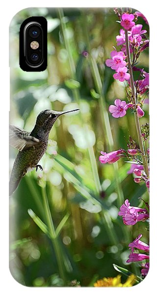 Hummingbird On Perry's Penstemon IPhone Case