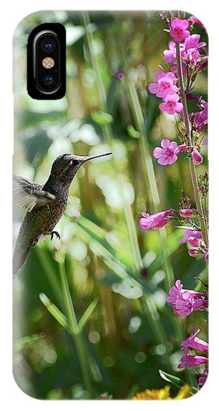 Hummingbird On Perry's Penstemon IPhone Case