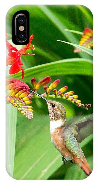 Beautiful Hummingbird iPhone Case - Hummingbird Snacking by Rebecca Cozart