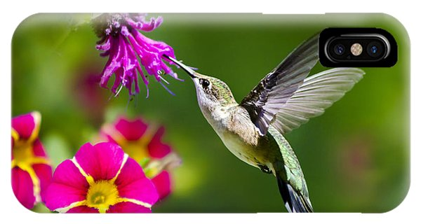 Humming Bird iPhone Case - Hummingbird With Flower by Christina Rollo