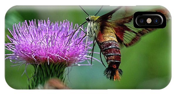 Hummingbirdbird Moth Dining IPhone Case