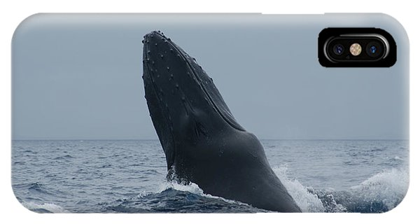 Humpback Whale Breaching IPhone Case