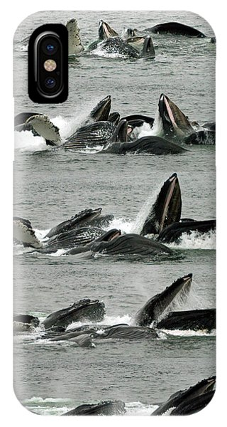 Humpback Whale Bubble-net Feeding Sequence X5 V1 IPhone Case