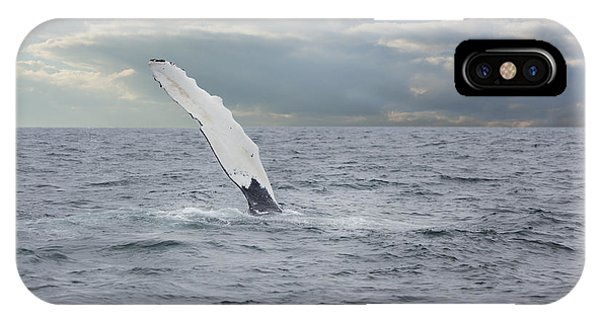 Humpback Whale Fin Slapping IPhone Case