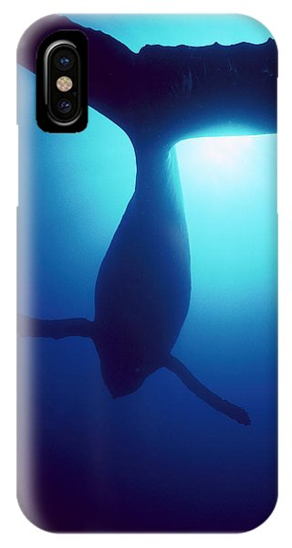 Whales iPhone Case - Humpback Whale Megaptera Novaeangliae by Flip Nicklin