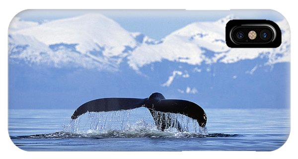 Mp iPhone Case - Humpback Whale Megaptera Novaeangliae by Konrad Wothe