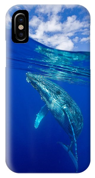 Humpback Whale With Clouds IPhone Case