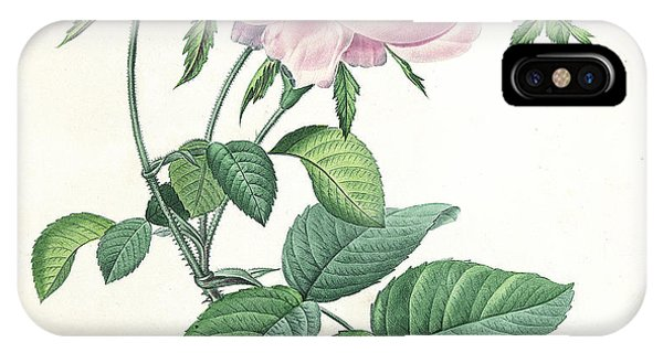 Hundred-leaved Rose IPhone Case