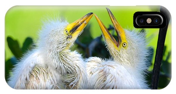 Hungry Egret Chicks IPhone Case