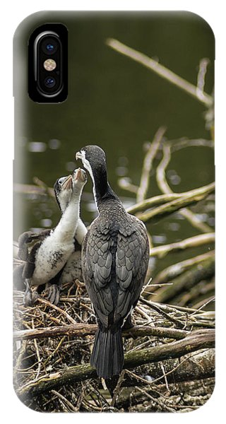 Hungry Pied Shag Chicks IPhone Case
