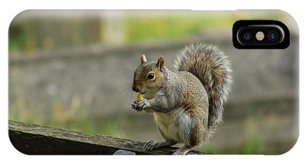 Hungry Squirrel IPhone Case