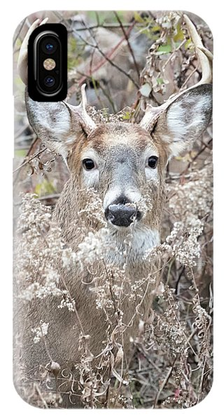 White Tailed Deer iPhone Case - Hunters Dream by Everet Regal
