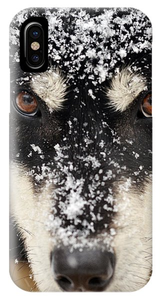 Husky And Snow Close-up IPhone Case