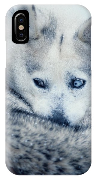 Husky Curled Up IPhone Case