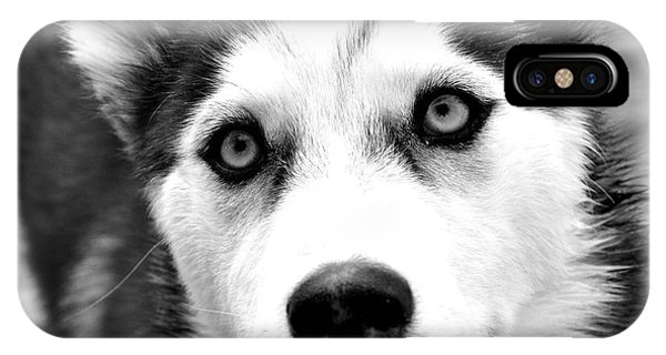 Husky Pup IPhone Case