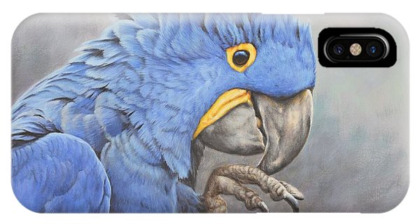 Hyacinth Macaw IPhone Case