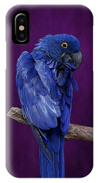 Hyacinth Macaw Panoramic IPhone Case