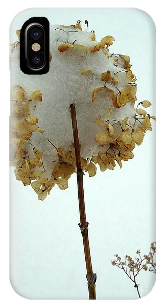 Hydrangea Blossom In Snow IPhone Case
