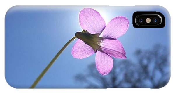 Petals iPhone Case - Native Flower by Gabrielle Coleman