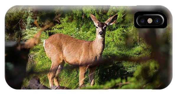 Mule Deer iPhone Case - I Spy by Brian Knott Photography
