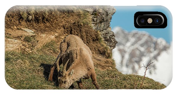 Ibex On The Mountains IPhone Case